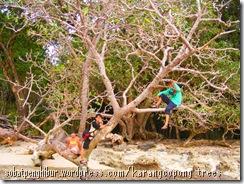 KarangCopong Trees